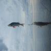 на окуней рыболовная база Черкасово рыбинское водохранилище 2 100x100 - Прогулки на квадроциклах
